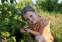 The girl collects a raspberry Stock Photography