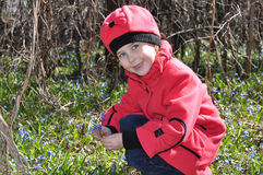 The girl  collects snowdrops Royalty Free Stock Images