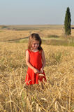 Girl collects wheat from the field for Shavuot Jewish Holiday Royalty Free Stock Photography