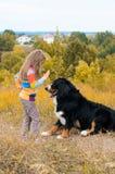 girl training large dog for walk through stock image