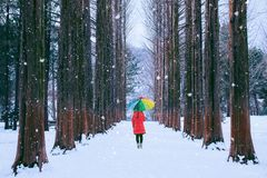 Girl with colourful umbrella in row tree, Nami island in South Korea. Winter in South Korea. Girl with colourful umbrella in row tree, Nami island in South stock images