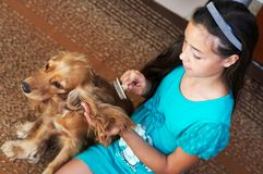The girl is combing the dog stock photo