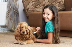 The girl is combing the dog Royalty Free Stock Photo