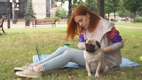 Girl combing her pug out in a park stock video