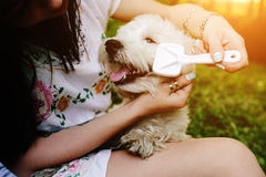 Girl combing her small dog Stock Photo