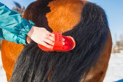 Girl is combing a magnificent horse tail. stock photography