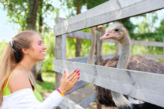 Girl communicating to an ostrich. Tourist communicating to an ostrich in the zoo Stock Image