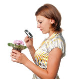 Girl considers violets through a magnifier Royalty Free Stock Images