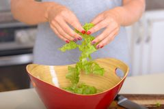 Girl cooking salad from greenery. Healthy lifestyle Stock Photography