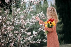 A girl in a coral dress with a bouquet of yellow and red tulips. Against a background of blossoming almonds. Spring concept royalty free stock photos