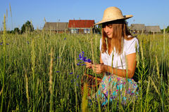 Girl with cornflowers in the field against the bac Royalty Free Stock Photo