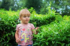 The girl costs on a tea plantation. The little girl costs on a tea plantation Royalty Free Stock Image