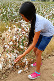 Girl cotton Stock Image