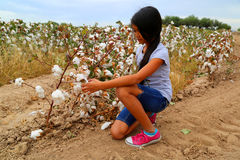 Girl cotton Stock Photos