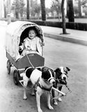 Girl in covered wagon pulled by dogs Royalty Free Stock Images