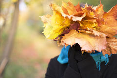 Girl covers her face leaves. Girl holding maple leaves and closes them face Stock Image