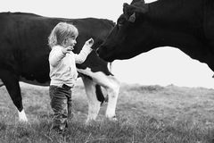 Girl and cow. Little girl meeting big cow Royalty Free Stock Photos