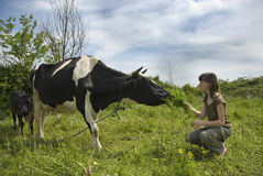 Girl and the cow royalty free stock photography