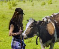 Young woman stroking a cow. Girl and the cow in a field. Shepherd and cow. Farmer Shepherd with Grazing Cows, Cowherd woman with Cattle. Contact stock image