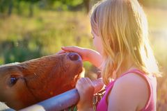 Girl with a cow Stock Images
