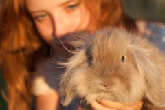Girl with the crawl. Small eared rabbit in the hands of a girl Stock Image