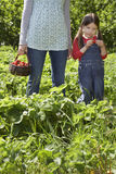 Girl With Cropped Mother In Strawberry Field Royalty Free Stock Photo