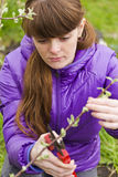 The girl cuts the branches with pruning shear Stock Photography
