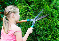 Girl cuts bush with scissors Royalty Free Stock Image