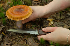 A girl cuts a poisonous toadstool in a forest. With a knife royalty free stock images