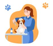 Girl is cutting the dog`s hair and caring for her. Caring for puppy, pet. Girl is cutting the dog`s hair and caring for her. hildren with dog. Caring for four royalty free illustration