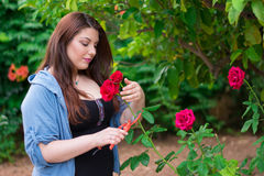 Girl cutting a rose Royalty Free Stock Image