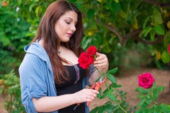Girl cutting a rose Stock Photography