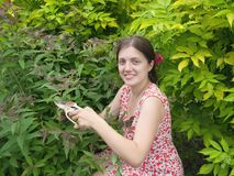 Girl cutting spiraea Stock Photography