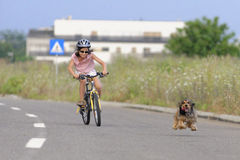 Girl cycling and dog running. Young girl with safety helmet cycling along a road with white markings and a small brown dog running beside her Royalty Free Stock Images