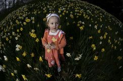 Girl in Daffodils no.1 Royalty Free Stock Photo