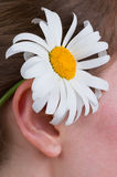 A girl with a daisy Royalty Free Stock Photo