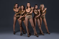 Girl dance group in sexy leopard swimsuits Royalty Free Stock Photos