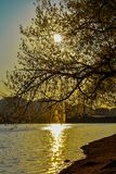 the artificial lake of tirana during the golden hour royalty free stock photography