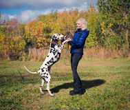 Girl dancing with a Dalmatian. Beautiful blonde girl in a blue jacket and black jeans dances with her dog breed Dalmatian in nature among green grass and trees stock photography