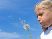 Girl and dandelion Stock Images