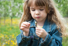 Girl with dandelion Stock Images