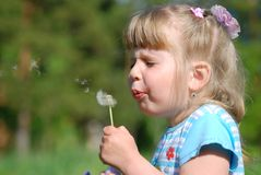 Girl and a dandelion Stock Photography