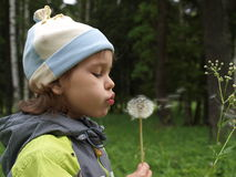The girl with dandelion. Royalty Free Stock Photos