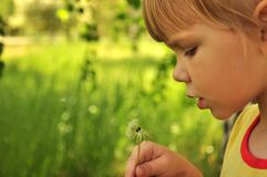 The girl with a dandelion Stock Photography