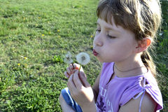 Girl with dandelion. Girl blowing on a dandelion sitting in the grass Stock Image