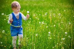 Girl at the dandelion field Royalty Free Stock Photo