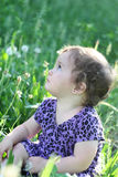 Girl  in a dandelion field Stock Photos