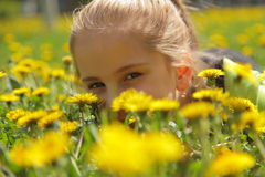A girl is in dandelions Royalty Free Stock Photography