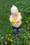 Girl and  dandelions Stock Photos