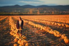 Girl in dark blue coat and orange skirt stands on pumpkins on the field on sunset. Halloween. Beautiful landscape in royalty free stock photography